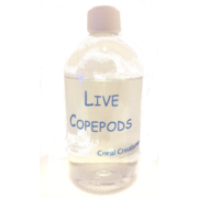 LiveCopepods2019V2