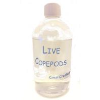 LiveCopepods2019V2600 198